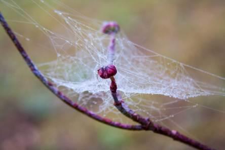 Morning dew drops spiderweb