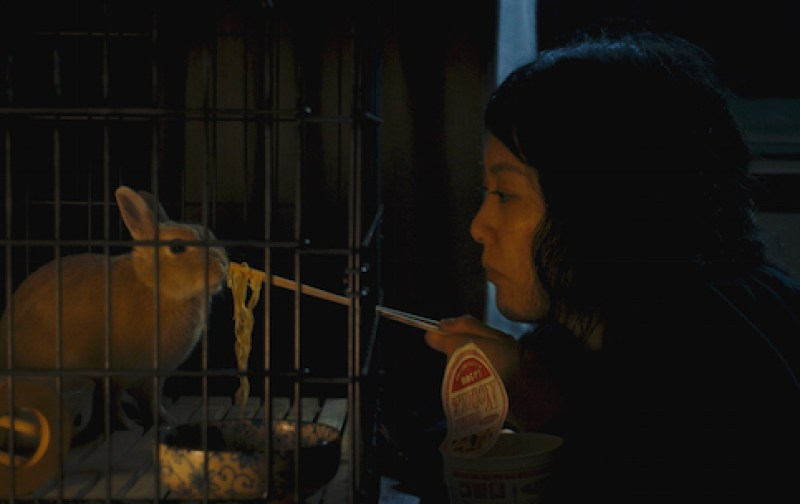 """The Zellner Bros. decision to have Bunzo the rabbit play an important part in Kumiko's life is partly inspired by their love for the book """"Watership Down."""" Plus, neither fashioned Kumiko as a dog or a cat person."""