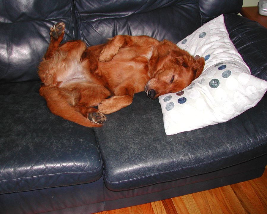 Tired Toller