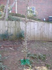 Bottle Tree 5