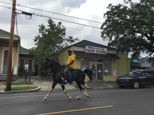 Horse on Magazine