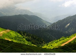stock-photo-amazing-wild-nature-view-of-deep-evergreen-forest-landscape-on-sunlight-at-middle-of-summer-406405426