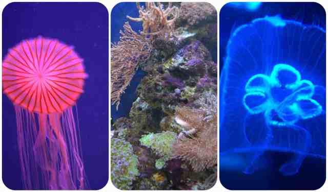 SeaLife5