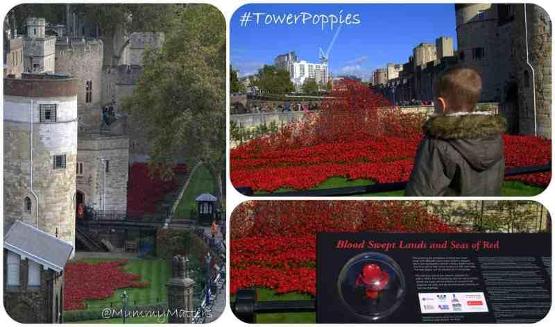 #TowerPoppies