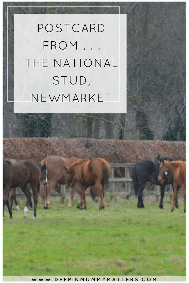 POSTCARD FROM . . . THE NATIONAL STUD, NEWMARKET