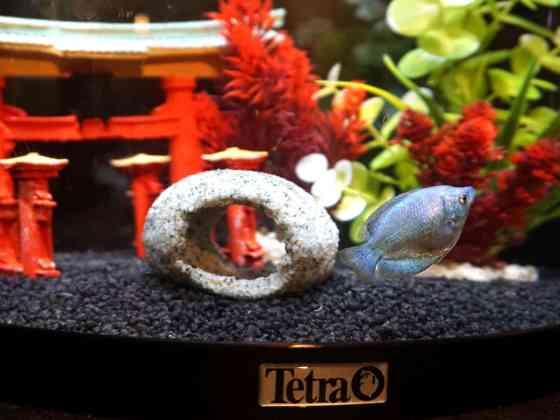 Tetra Aqua Art Explorer