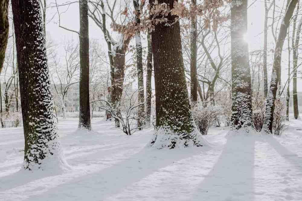 Winter park scenery