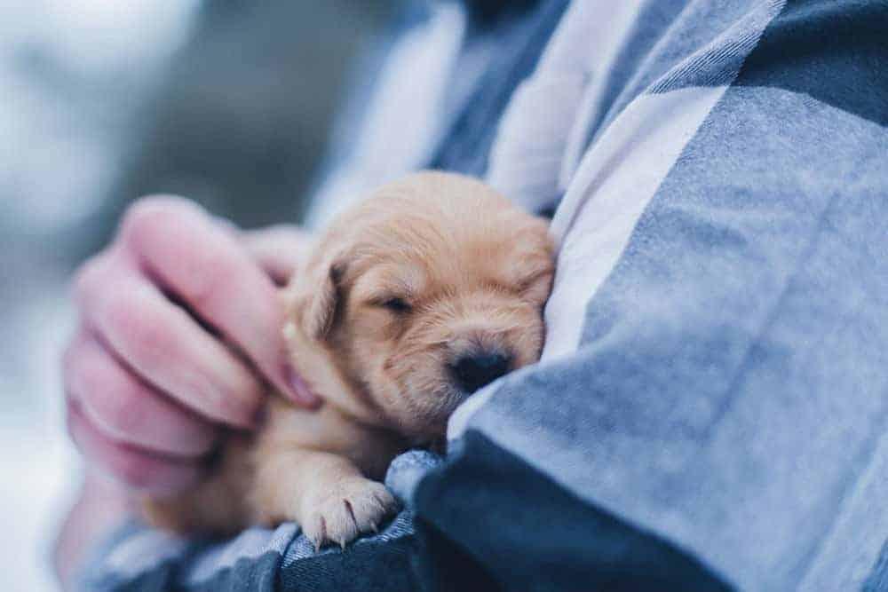 Getting a pet