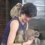 Vervet monkey babies