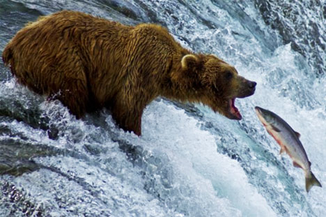 https://i2.wp.com/deepintoscripture.com/wp-content/uploads/2011/06/grizzly-bear-eating-salmon-photo01.jpg