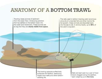 Anatomy of a bottom trawl (WWW2)