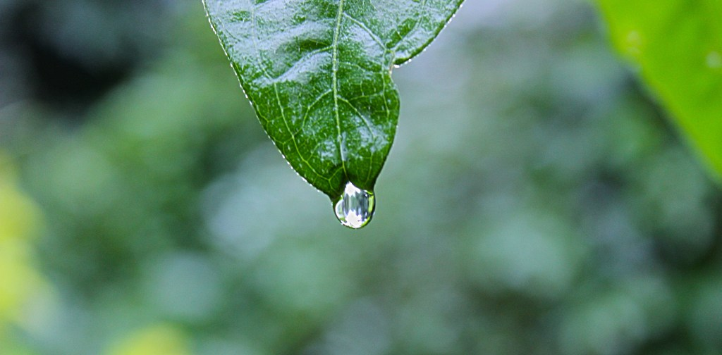 dewdrop on a leaf