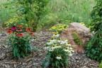 Perenial flowers in bloom
