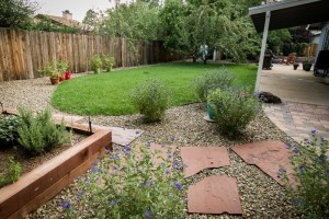 Backyard in Flagstaff