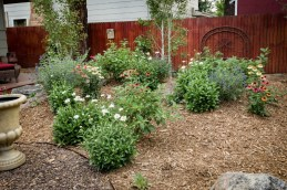 Perennial flowers, including Shasta Daisies and Purple Coneflowers, flowering shrubs, including Bluemist Spirea and Red Twig Dogwoods