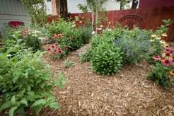 Shrubs in mounded backyard area