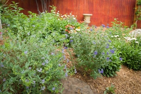 Perennial plantings create a haven for pollinators in this backyard.