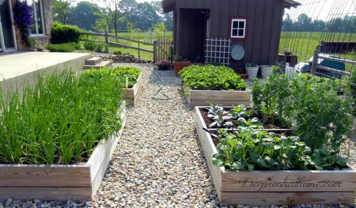 5 Reasons We Continue To Keep A Small Garden Year After Year, 4 x 8 garden box, raised bed, Robert Brault, quote, tool, less weeding, preparedness, small garden, big garden, earthing, grounding, stress-relieving, Self-Sufficiency, Money-Savings, Vegetable, Herb, Fruit Encyclopedia, interactive tool, Gardener's Supply Company, kitchen garden, potager, 4 x 8 raised boxes, square foot garden, online garden planning,