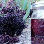 It's Elderberry Time - Making Cough Syrup and Tincture NO text