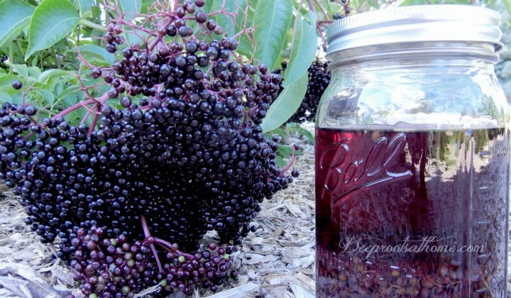 Elderberry Cold & Flu Syrup and Tincture Recipe