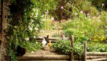 Companion planting what to plant and not to plant with tomatoes potager garden style combining edible flowering plants in the french tradition fandeluxe Images
