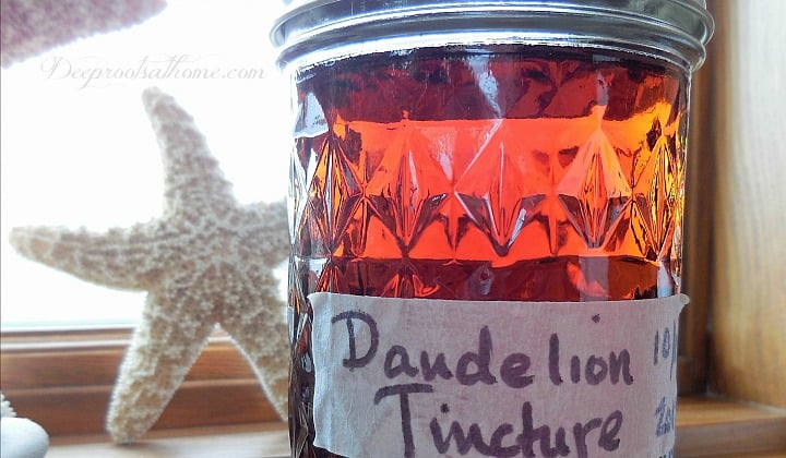 Homemade Medicinal Dandelion Tincture, DIY, herbal remedy, Taraxacum officinale, directions, ingredients, homemade detox, stock medicine cabinet, spring tonic, health benefits, anti-aging, blood cleanser, liver cleanse, stop acne, immune stimulant, herbal remedy, old-time stimulant,