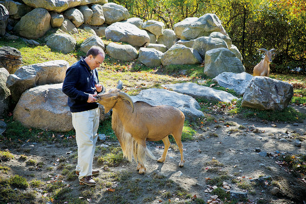 Dr. Vint Virga in his natural habitat: 'I sometimes feel like I connect with animals a lot easier than I do with people. I've always been looking for what is at the root of that, how can I relate to the world, and what is my purpose in it.'