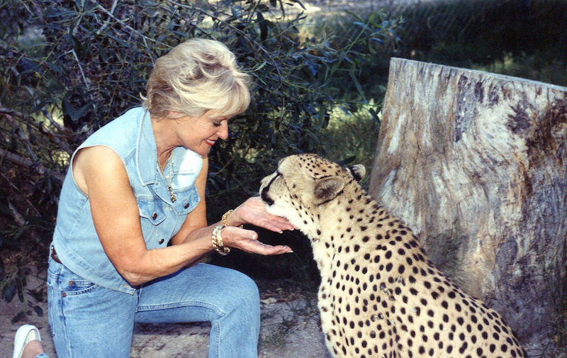 Tippi Hedren with a cheetah at Shamabala Preserve (Photo: Kim Bartlett, Animal People, Inc.)