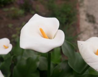 A Walk Through Savannah Botanical Gardens