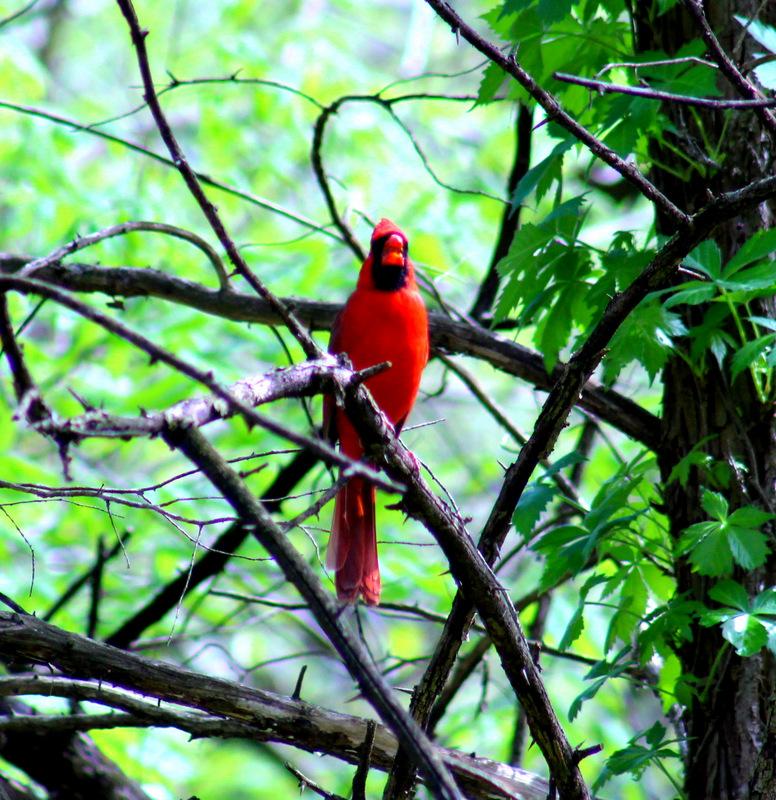 Overland Park Arboretum Birding Walk