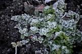 botanic 27 dec18
