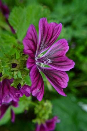 garden 28 June 201508
