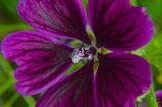 garden 28 June 201509