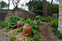 The Bath Priory open garden - 12
