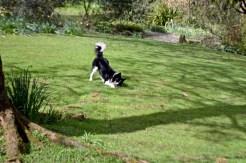 burrows farm gardens - 25