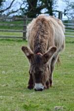 donkeys - 19