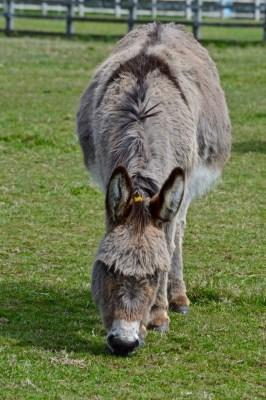donkeys - 22
