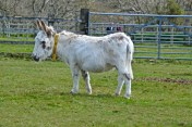 donkeys - 23