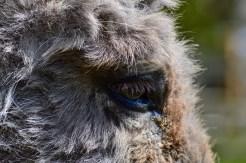 donkeys - 28