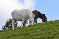donkeys - 3