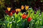 garden april 2017 - 75