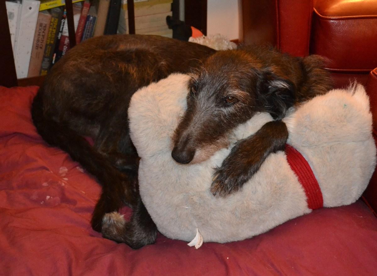 AKC Education Summit Report – The Scottish Deerhound Club of