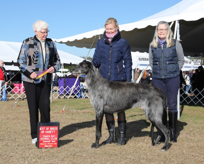 2018 Yearbook of New Title Winners – The Scottish Deerhound Club of