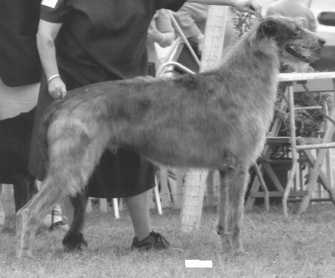 Frozen Semen Directory – The Scottish Deerhound Club of America