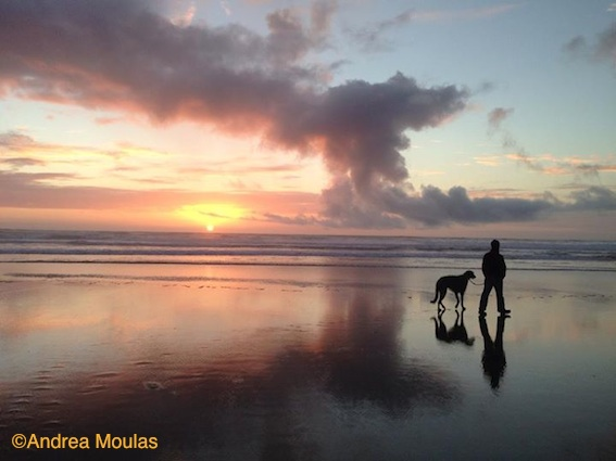 Photo by Andrea Moulas of Deerhound and person at sunset.