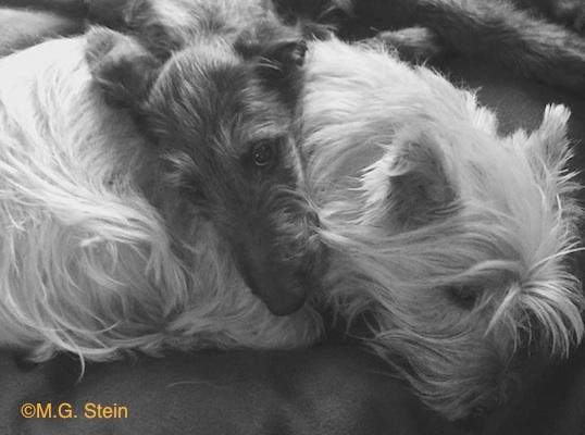 Deerhound and terrier by M.G. Stein