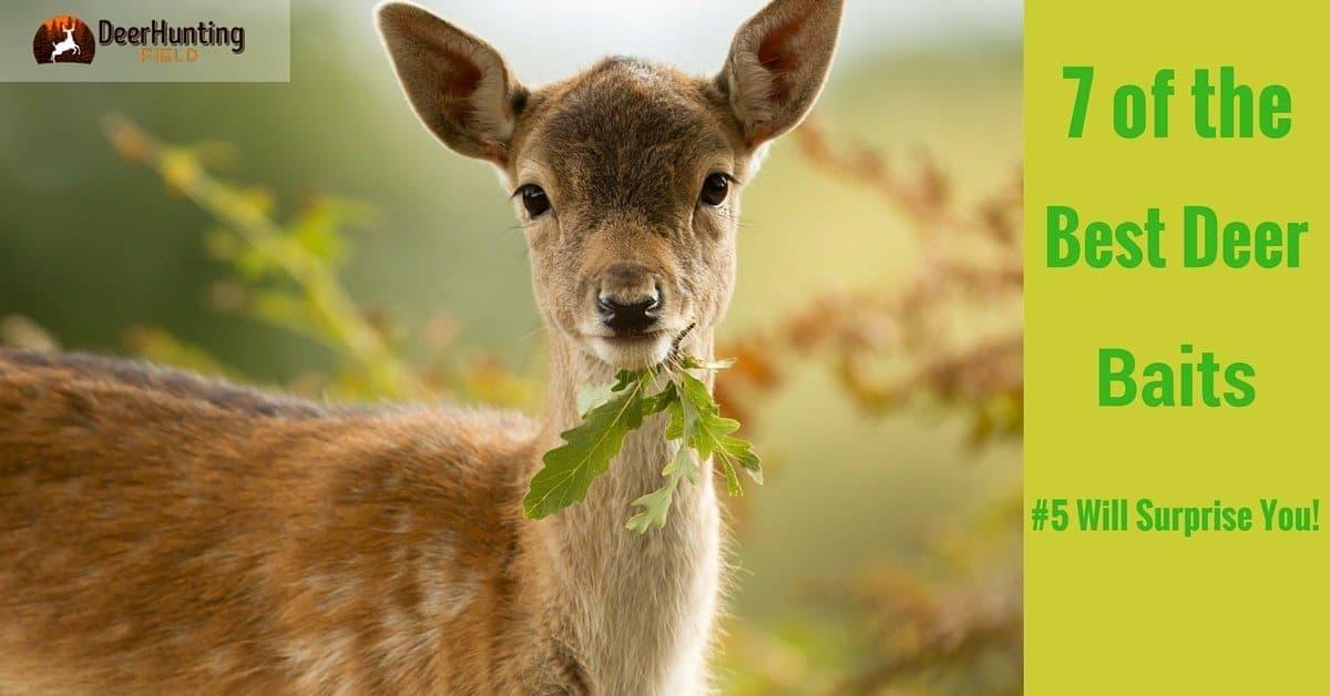 best-deer-baits