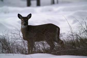 when- to-plant-food-plot-for-deer