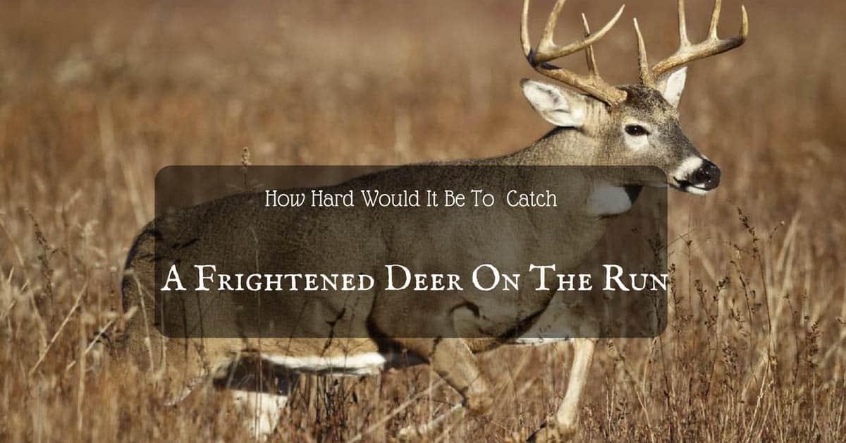 How Fast Can A Deer Run