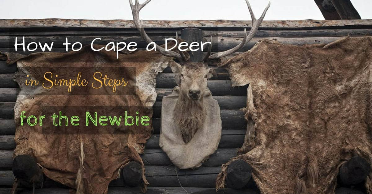 How to Cape a Deer